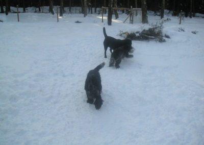 hund_lek_feb_2010